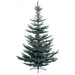 Kaemingk Nobilis Fir Tree 180cm