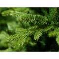 Kaemingk Everlands 1.8m Allison Pine Tree 3
